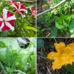 fiori, erba cipollina, basilico ecc