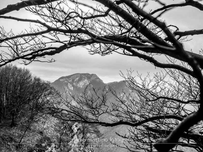 black and white silhouette of a huge beech tree with background of Mount Mai on the Monti Picentini park in Campania, Italy