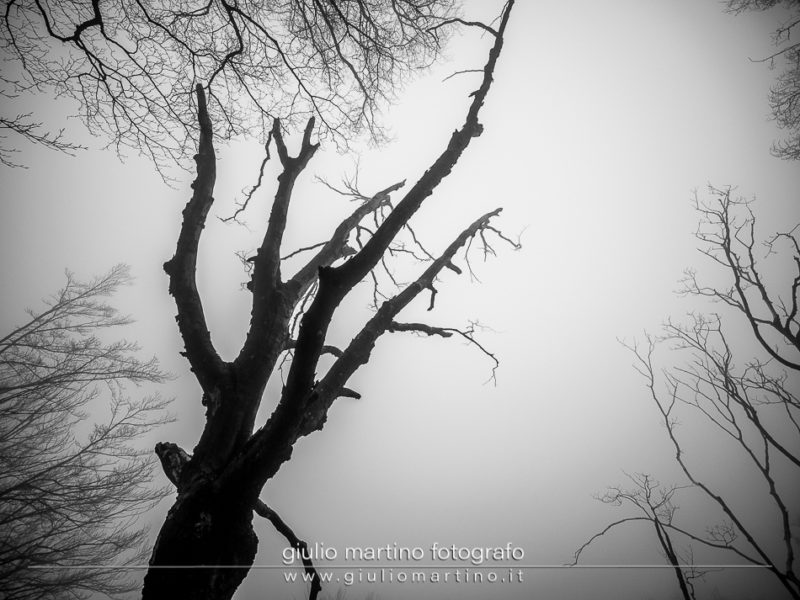 black and white silhouette of a dry beech