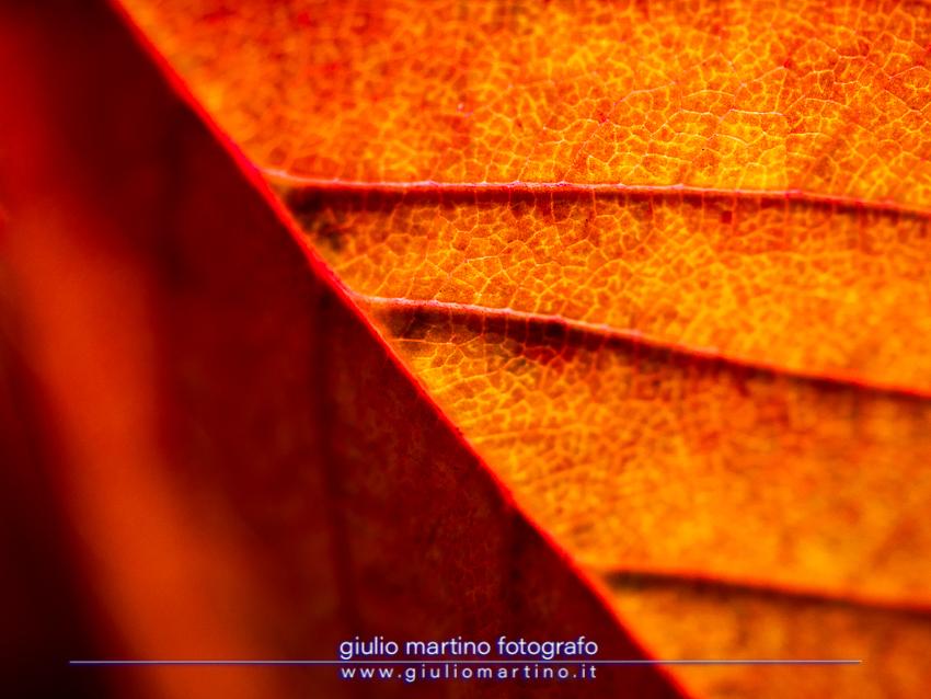 Un po' d'autunno in zona rossa. 15/11/2020