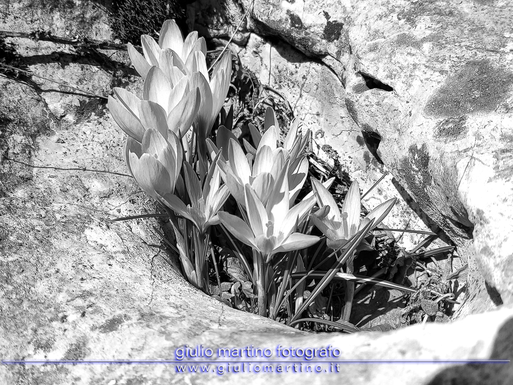 Monti del Matese – Monte Miletto da Campitello