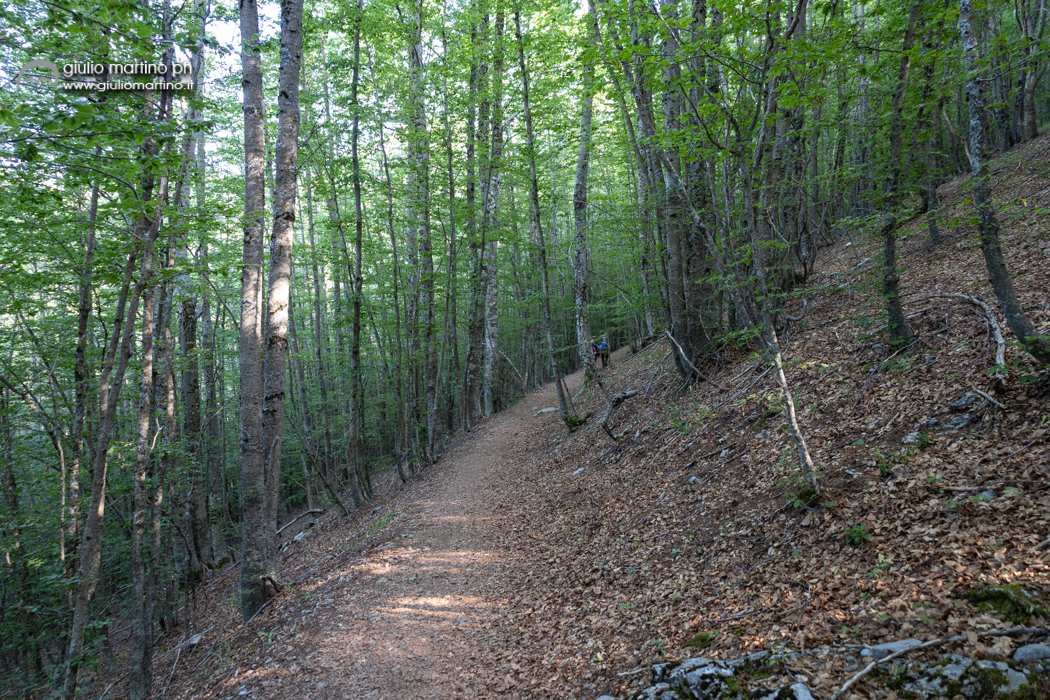 Monte Pollino, Colle dell'Impiso, Piano Gaudolino, Il Pollinello, Il Patriarca del Pollino
